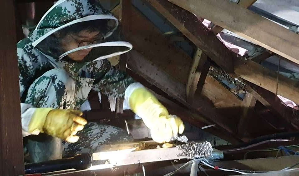 Steve Honey saving bees