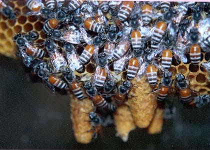Steve Honey saving bees