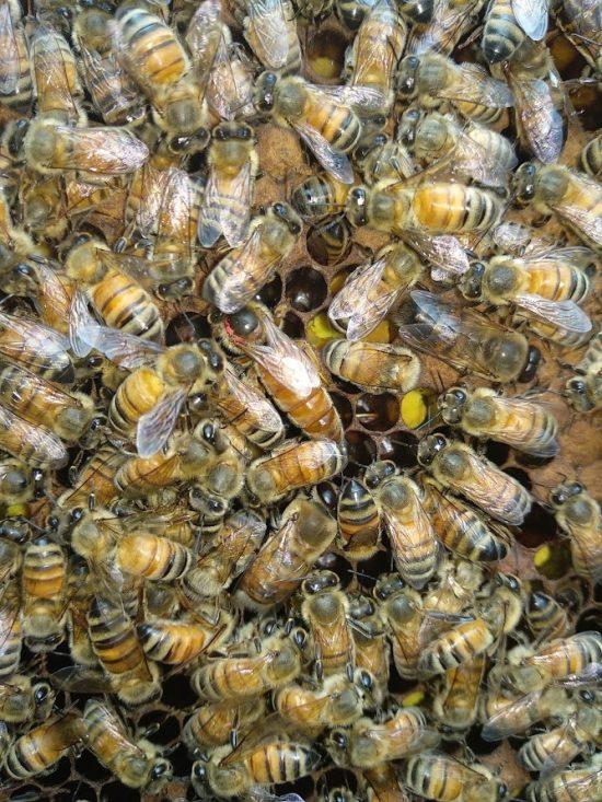 beekeeping course